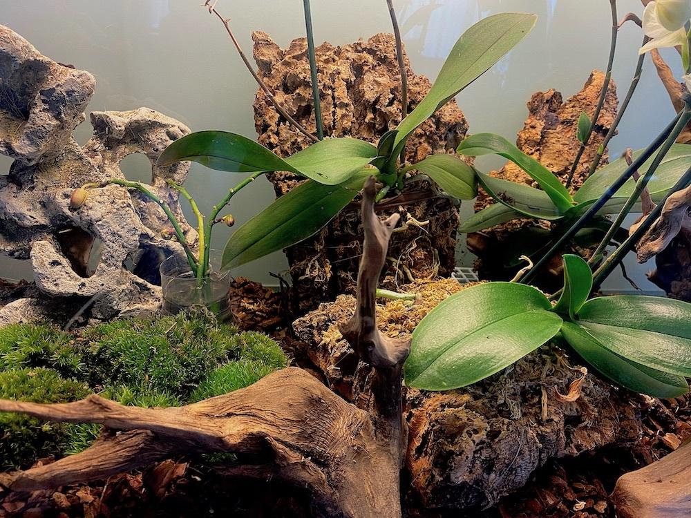 Orchidario-Magda-0
