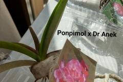 FOTO-VANDA-PONPIMOL-X-DR.-ANEK