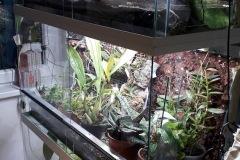orchidario-2