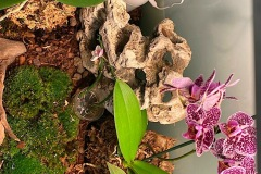 Raalizzazione-Orchideario-foto2