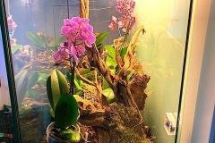Raalizzazione-Orchideario-foto4-