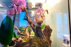 Raalizzazione-Orchideario-foto5