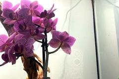 Raalizzazione-Orchideario-foto7-